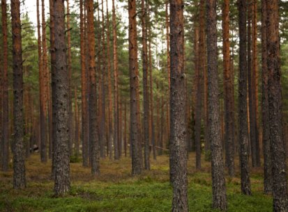 Finland. Forest